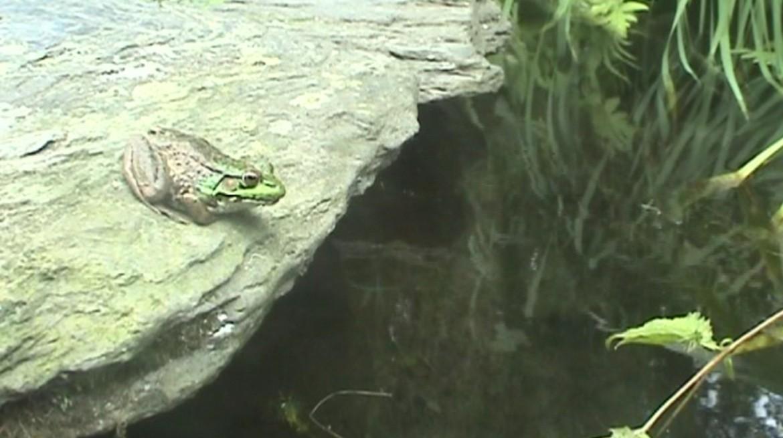 Rachel Harrison-Frog still-