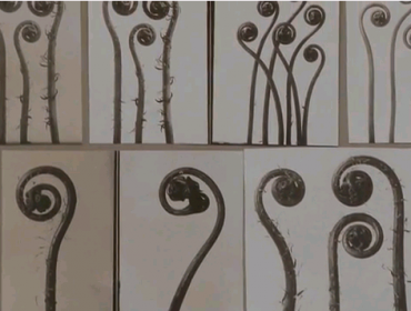 Karl Blossfeldt screenshot