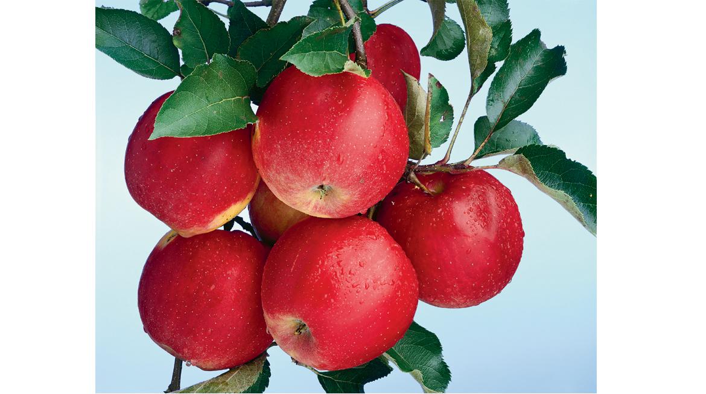 christopher williams- apples_web