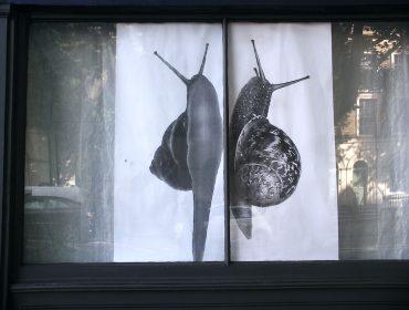 snailwindowresize2