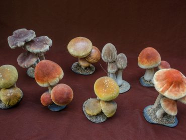 111 - Collection of Mushrooms 20130925_4021