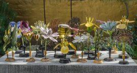 Botanical models 19, 37, 47, 55, 127 & 128 20130926_4642